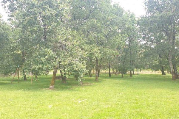 Bussac Forêt